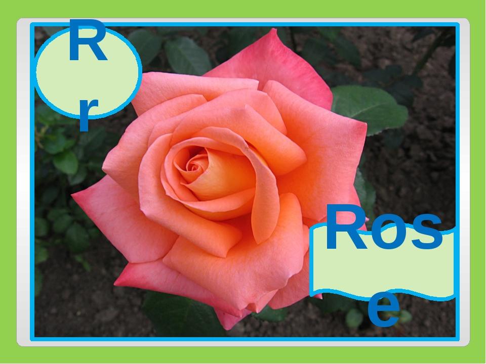 Rr Rose Rr