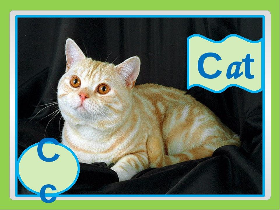 Cc Cat Cc