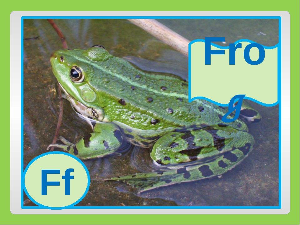 Ff Frog Ff