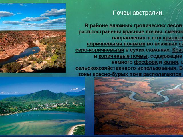 Почвы австралии. В районе влажных тропических лесов на севере распространены...