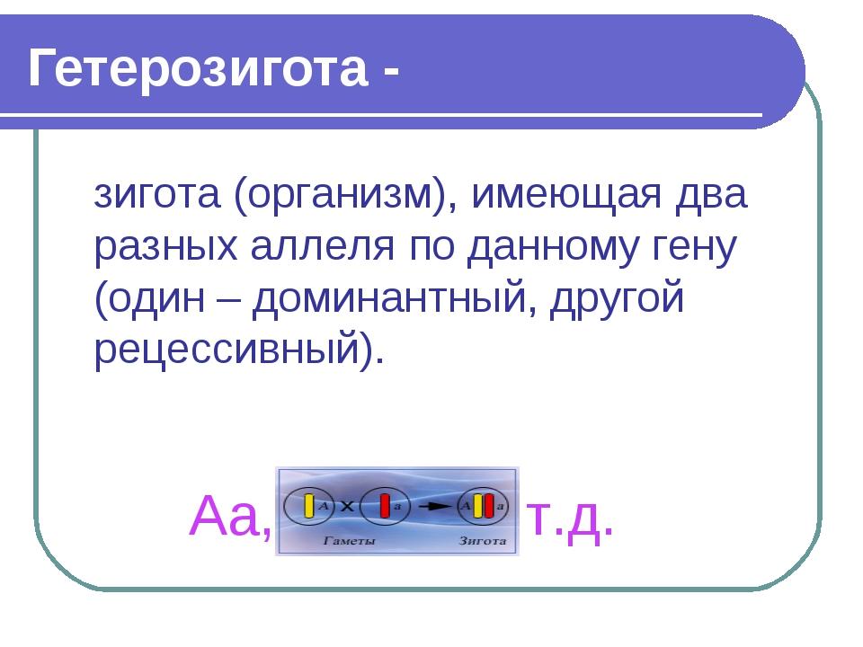 Гетерозигота - зигота (организм), имеющая два разных аллеля по данному гену (...