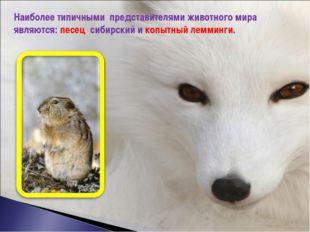 Наиболее типичными представителями животного мира являются: песец сибирский и