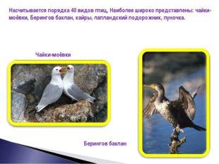 Насчитывается порядка 40 видов птиц, Наиболее широко представлены: чайки-моёв