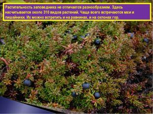 Растительность заповедника не отличается разнообразием. Здесь насчитывается о