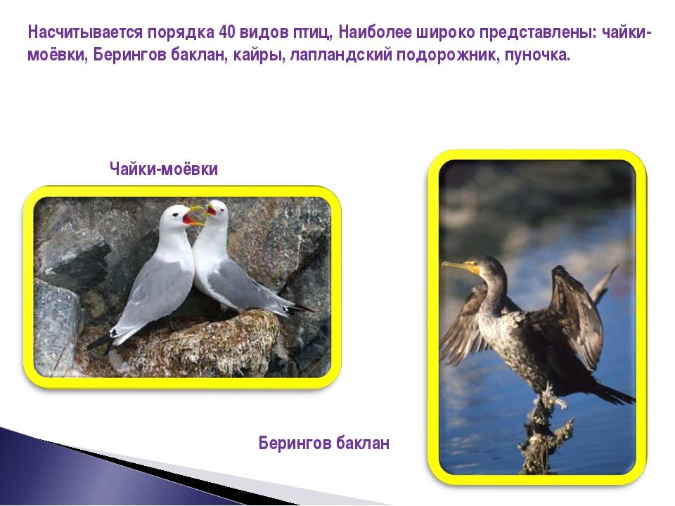 Насчитывается порядка 40 видов птиц, Наиболее широко представлены: чайки-моёв...