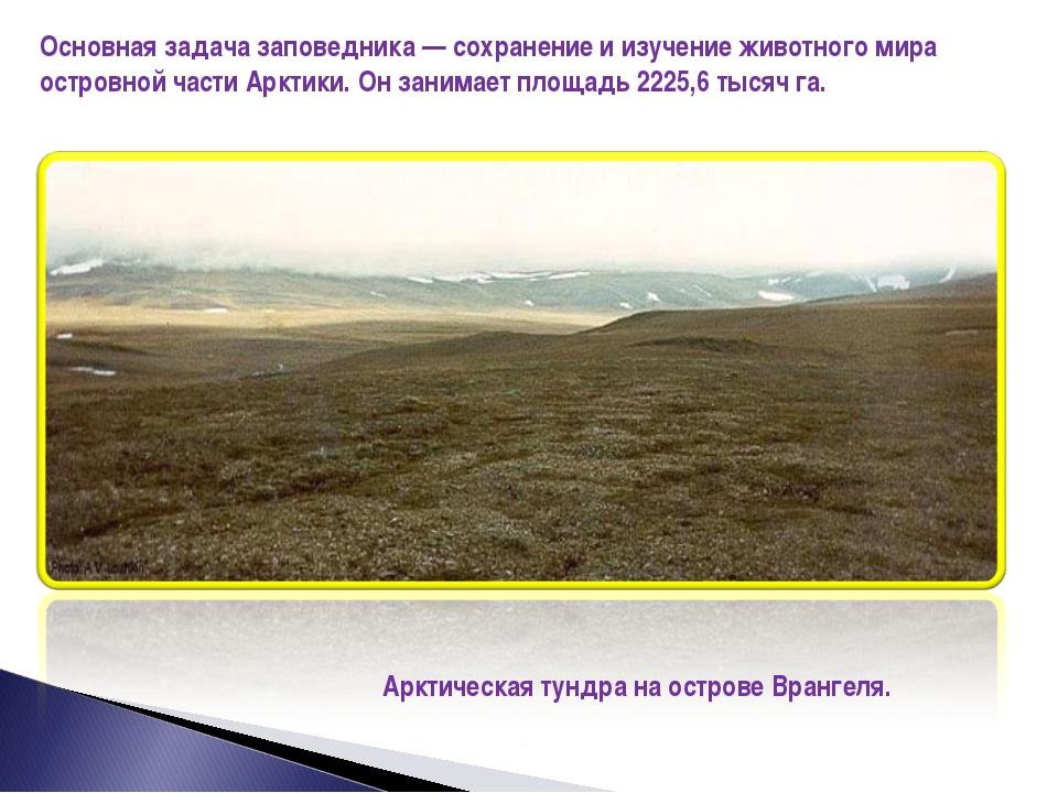 Основная задача заповедника — сохранение и изучение животного мира островной...