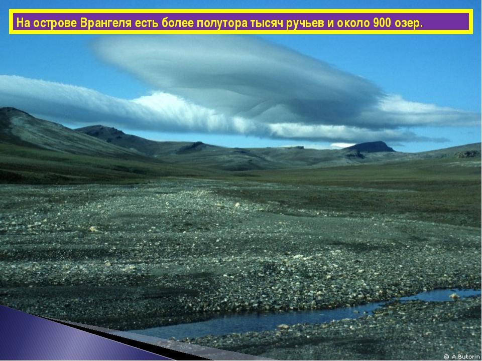 На острове Врангеля есть более полутора тысяч ручьев и около 900 озер.