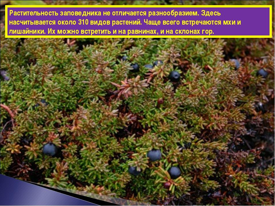 Растительность заповедника не отличается разнообразием. Здесь насчитывается о...