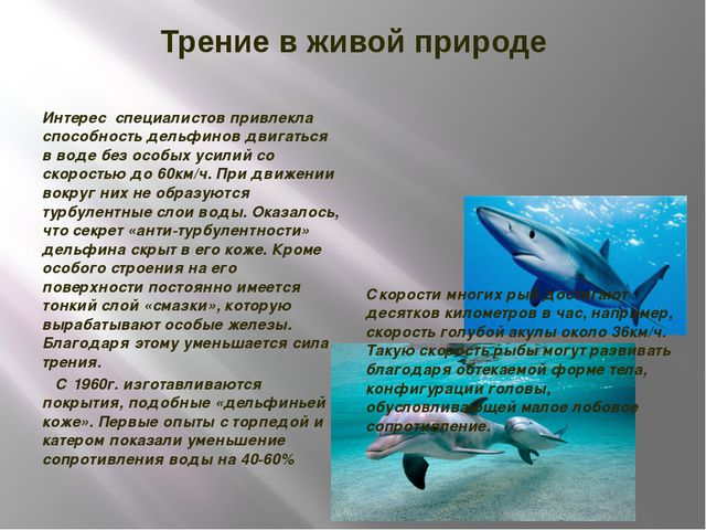 Трение в живой природе Интерес специалистов привлекла способность дельфинов д...