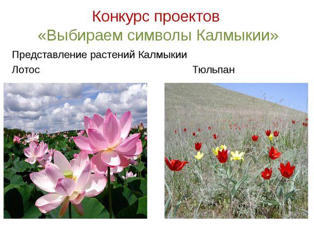 Конкурс проектов «Выбираем символы Калмыкии» Представление растений Калмыкии...