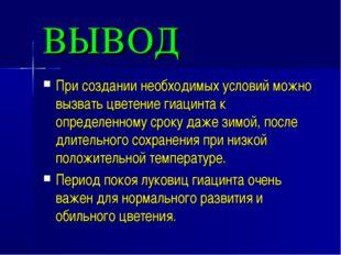ВЫВОД При создании необходимых условий можно вызвать цветение гиацинта к опре