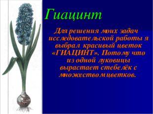 Гиацинт Для решения моих задач исследовательской работы я выбрал красивый цве