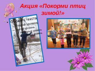 Акция «Покорми птиц зимой!»