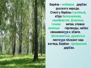 Берёза - любимое дерЕво русского народа. Ствол у берёзы стройный, кОра белосн