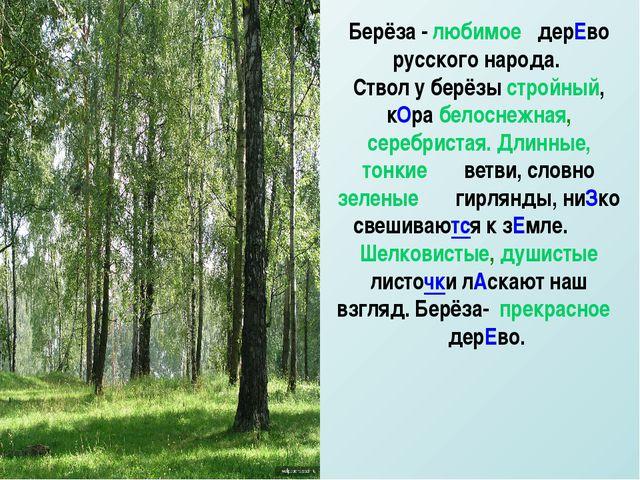 Берёза - любимое дерЕво русского народа. Ствол у берёзы стройный, кОра белосн...