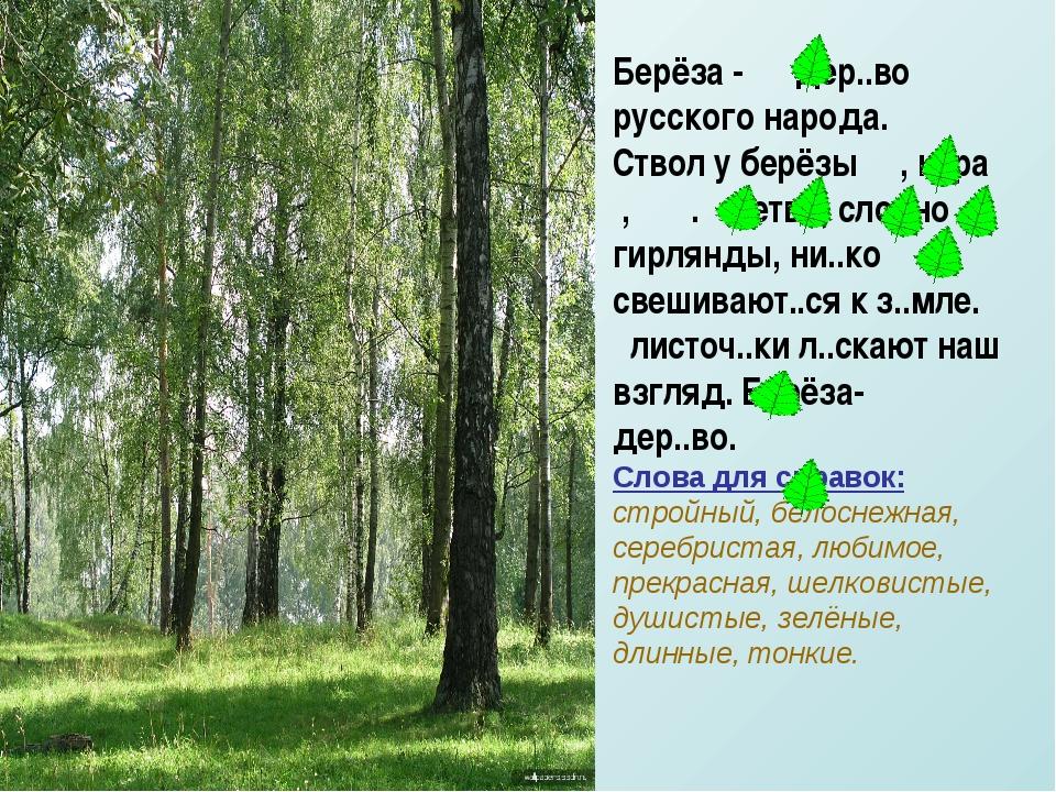 Берёза - дер..во русского народа. Ствол у берёзы , к..ра , . ветви, словно ги...
