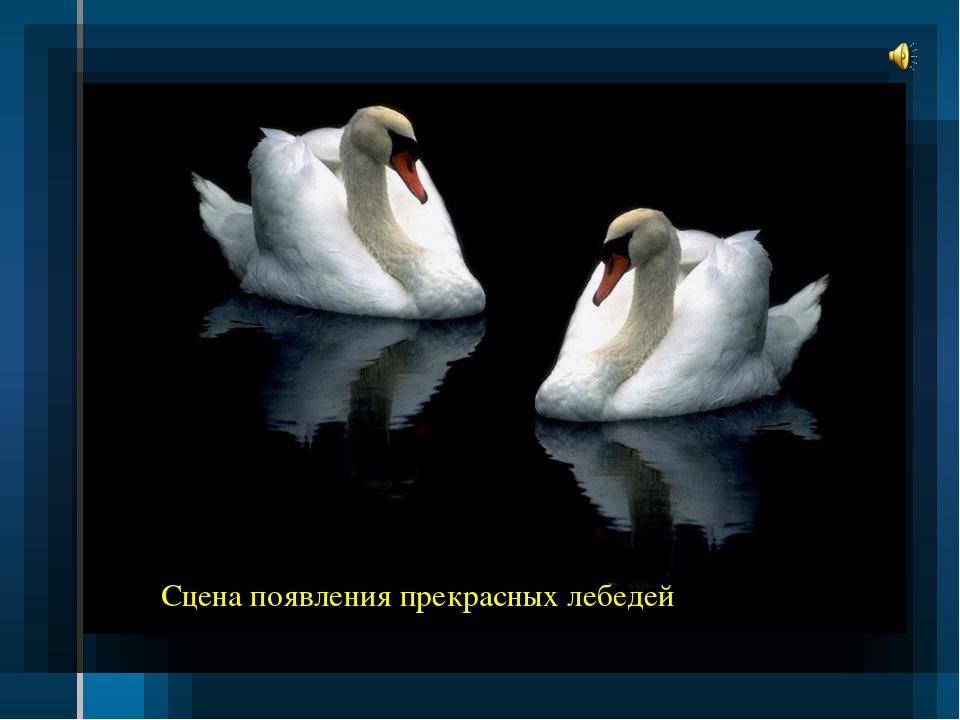 Сцена появления прекрасных лебедей