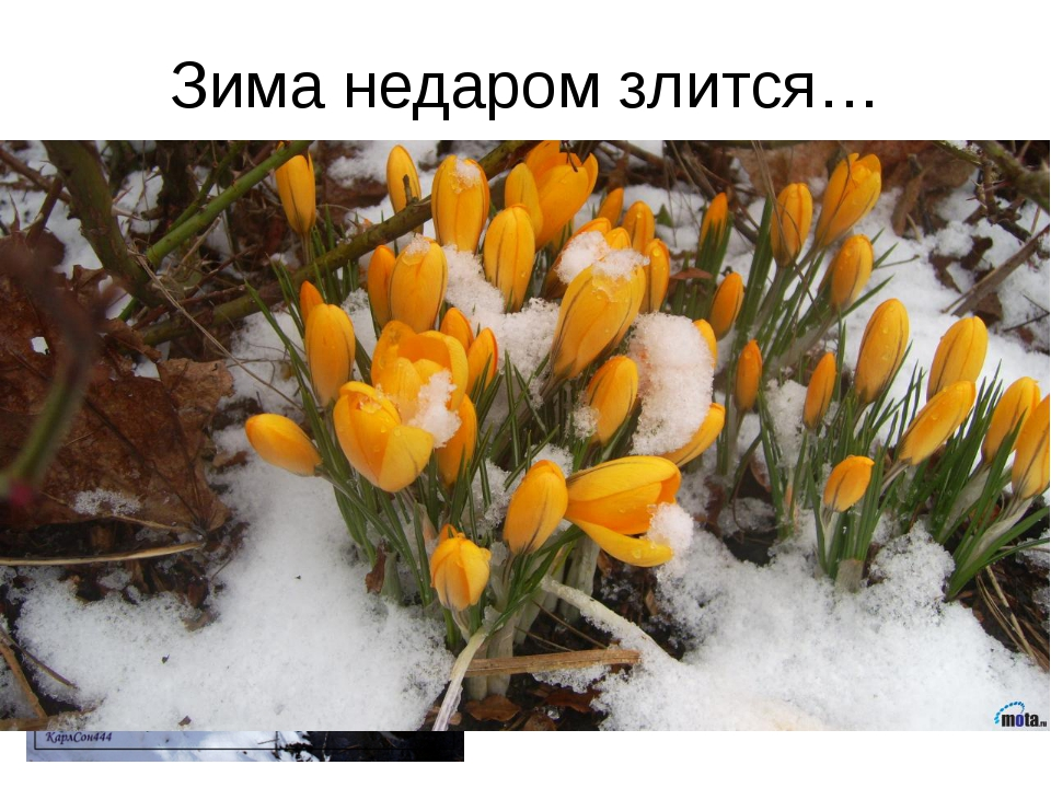 Зима недаром злится…