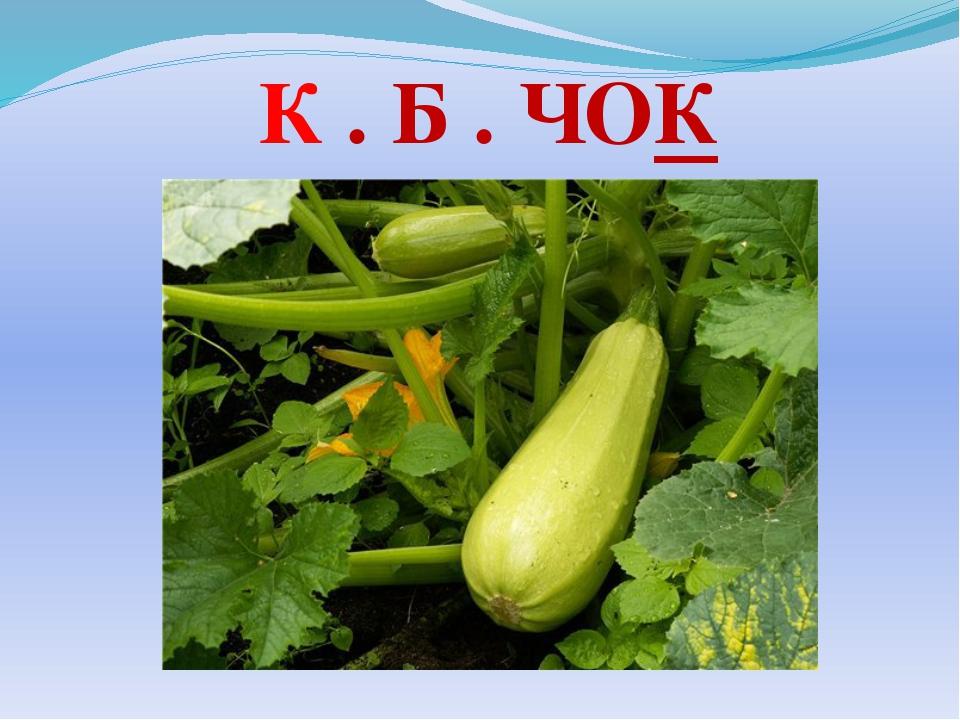 К . Б . ЧОК