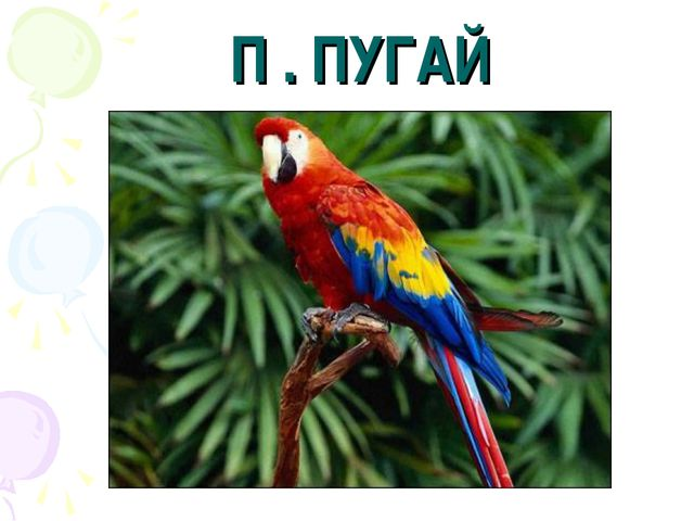 П . ПУГАЙ