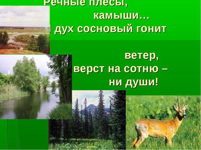Речные плёсы, камыши… И дух сосновый гонит ветер, И верст на сотню – ни души!