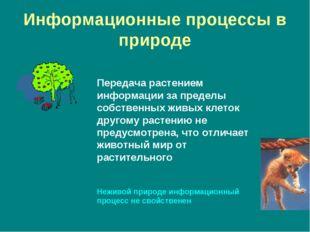Информационные процессы в природе Передача растением информации за пределы со
