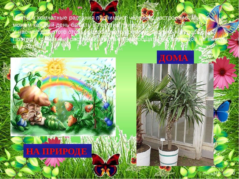 Цветы и комнатные растения поднимают человеку настроение. Мы не можем каждый...
