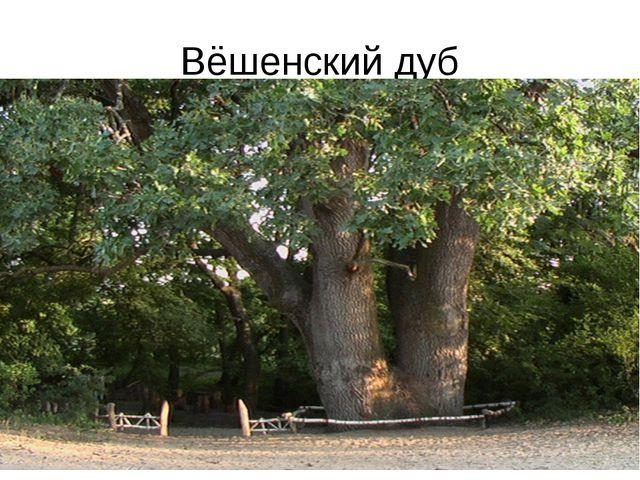 Вёшенский дуб