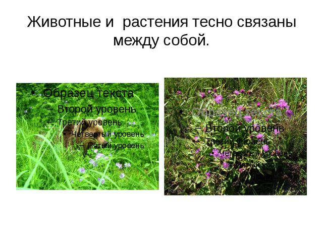 Животные и растения тесно связаны между собой.