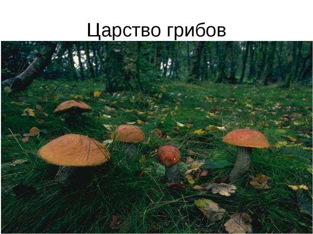 Царство грибов