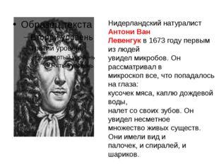 Нидерландский натуралист Антони Ван Левенгук в 1673 году первым из людей увид