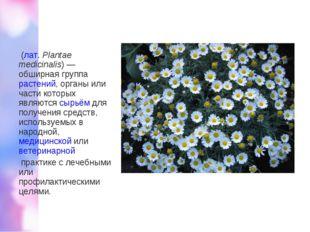 Лека́рственные расте́ния (лат.Plantae medicinalis)— обширная группарастен