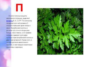 П В числе полезных веществ, имеющихся в петрушке, выделяютвитаминыВ, К, С и
