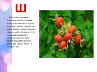 Ш В растении обнаружено большое количество полезных веществ, а также многие д