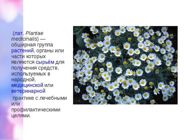Лека́рственные расте́ния (лат.Plantae medicinalis)— обширная группарастен...
