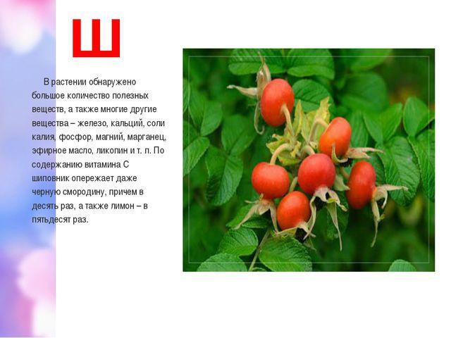 Ш В растении обнаружено большое количество полезных веществ, а также многие д...