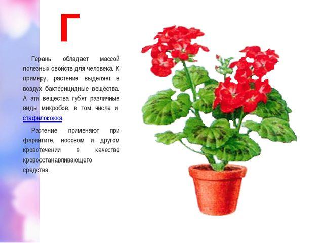 Г Герань обладает массой полезных свойств для человека. К примеру, растение в...