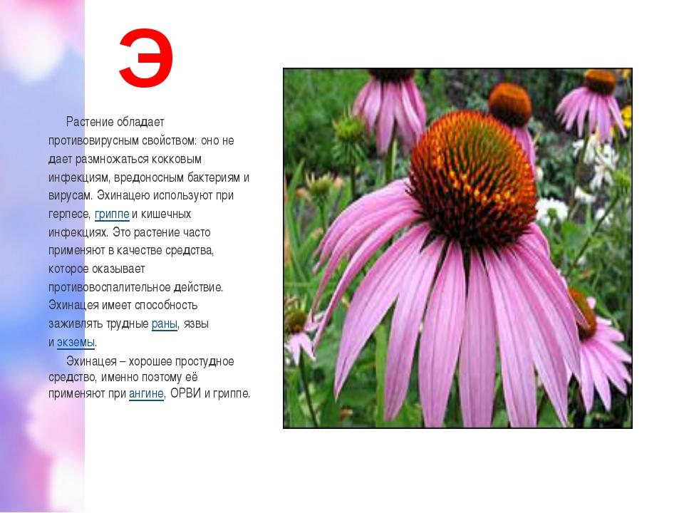 Э Растение обладает противовирусным свойством: оно не дает размножаться кокко...