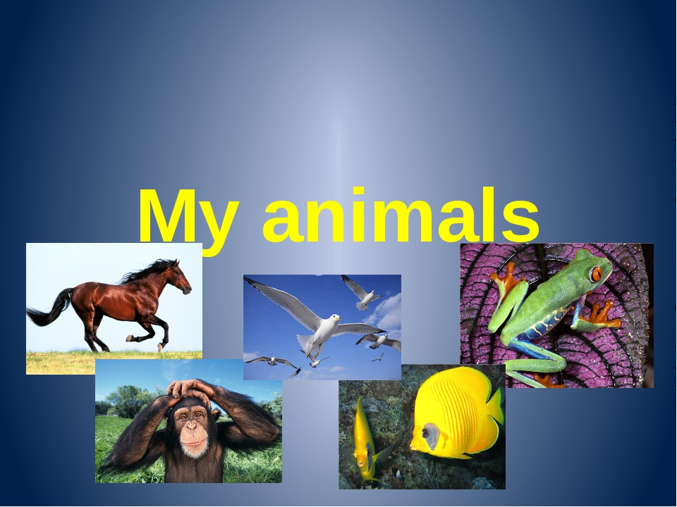 My animals Разработала:Пьянкова Юлия Александровна Учитель английского языка...