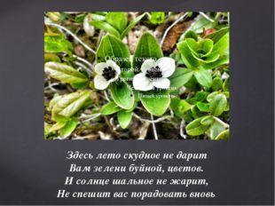Здесь лето скудное не дарит Вам зелени буйной, цветов. И солнце шальное не жа