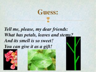 Guess: Tell me, please, my dear friends: What has petals, leaves and stems? A