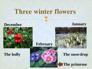 Three winter flowers December January February The primrose The snowdrop The