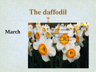 The daffodil March 
