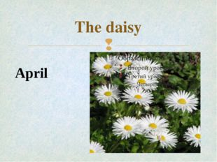 The daisy April 