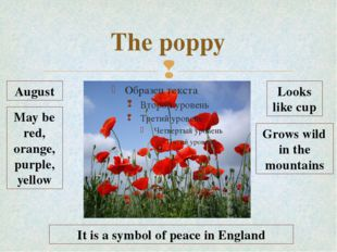 The poppy August May be red, orange, purple, yellow Looks like cup Grows wild