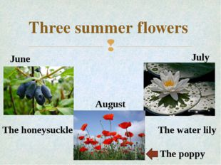 Three summer flowers June July August The poppy The water lily The honeysuckl