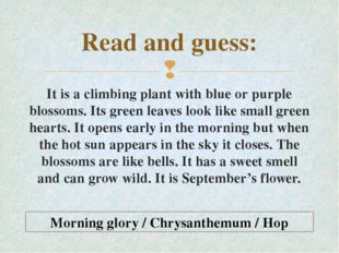 Read and guess: It is a climbing plant with blue or purple blossoms. Its gree