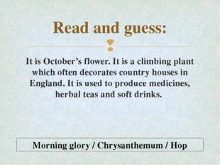 Read and guess: It is October's flower. It is a climbing plant which often de