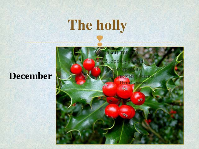 The holly December 