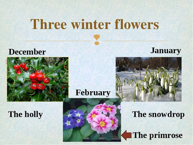 Three winter flowers December January February The primrose The snowdrop The...